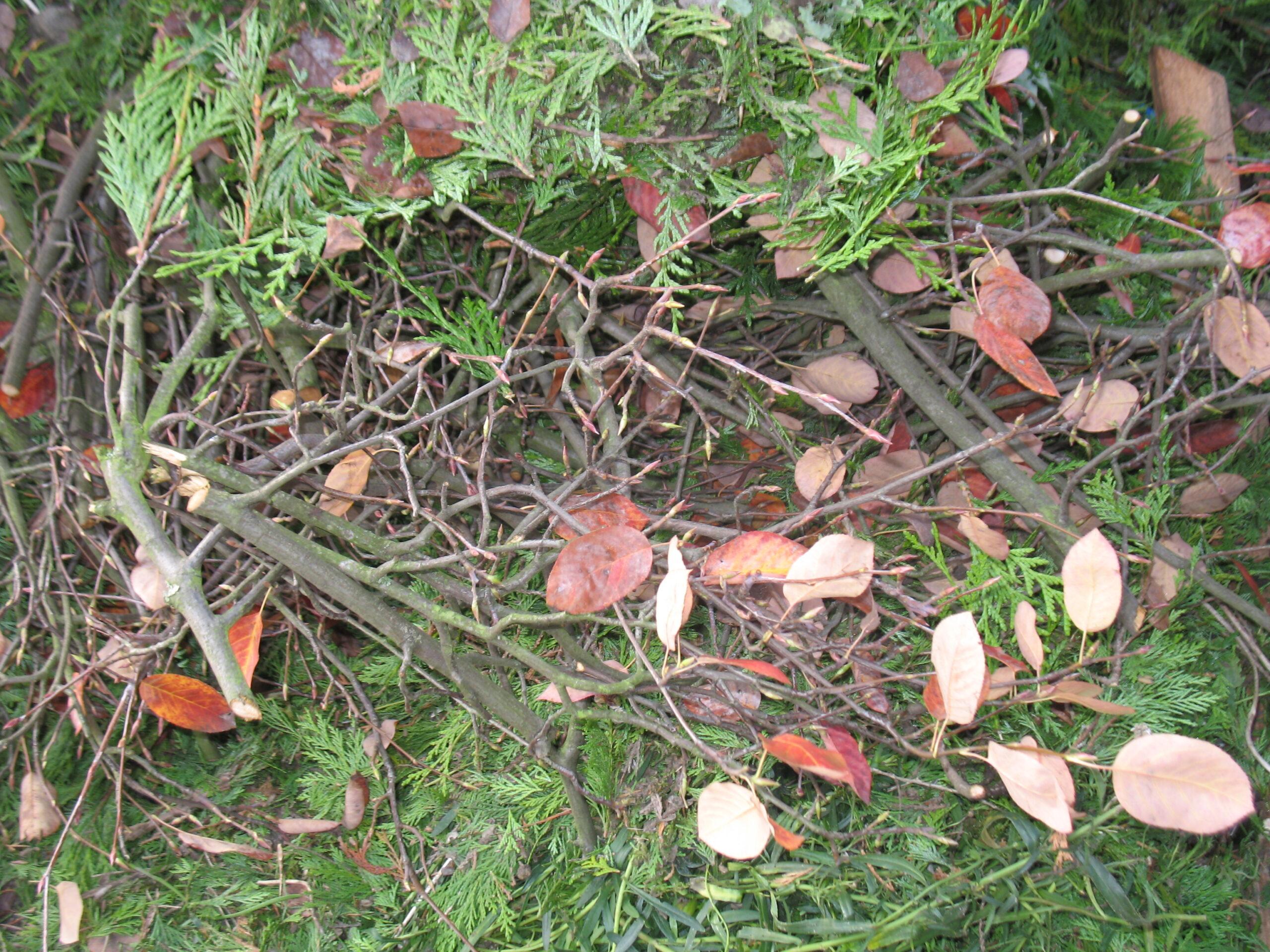 Hecken und Baumschnitt